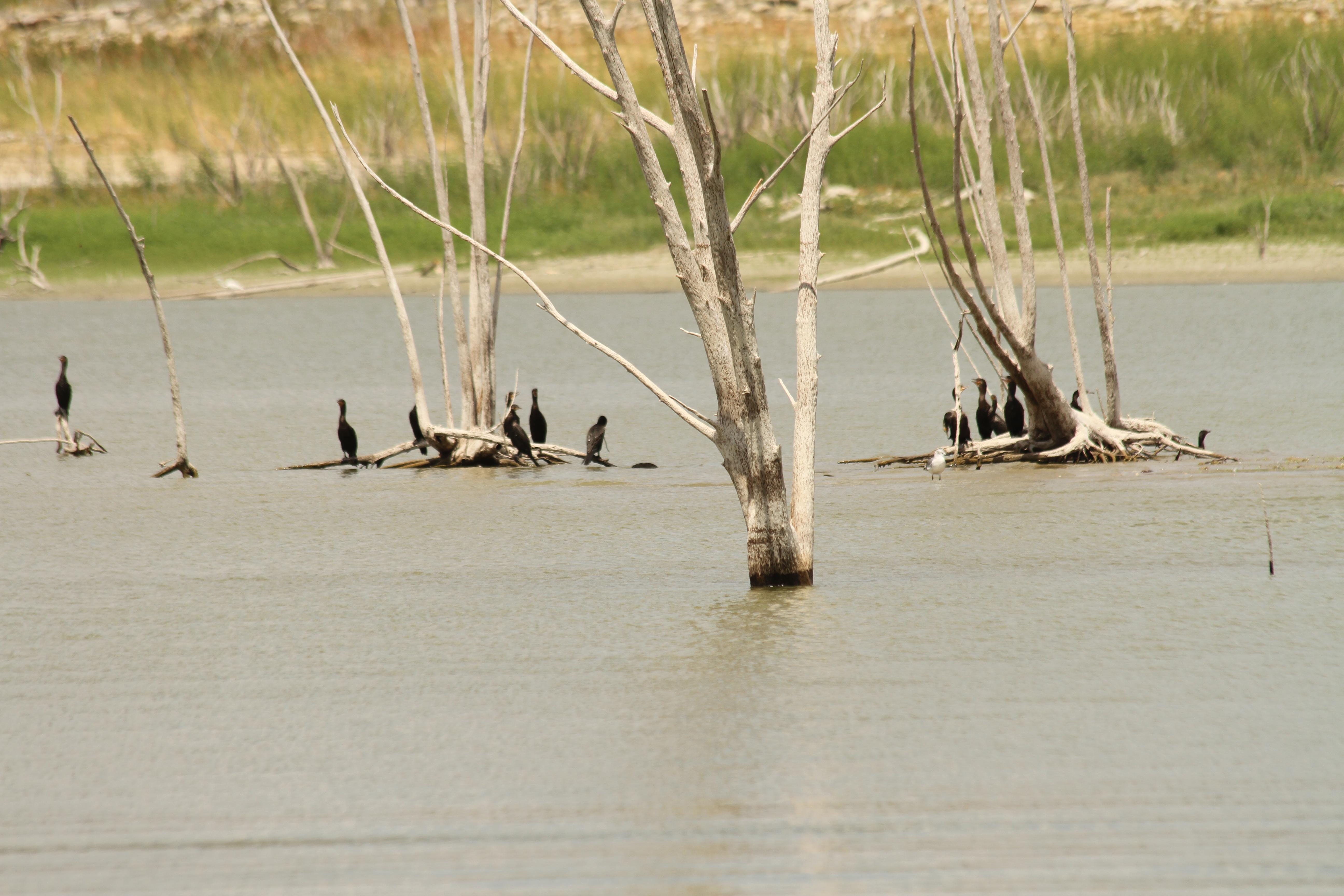 Falcon lake zapata tx untamed sportsman for Falcon lake fishing